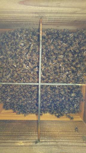 二ホンミツバチの巣箱を内見